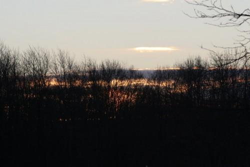 Busse Woods November 2009